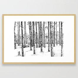 A fox in pine forest Framed Art Print