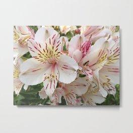 Alstromeria Sping Flower Metal Print
