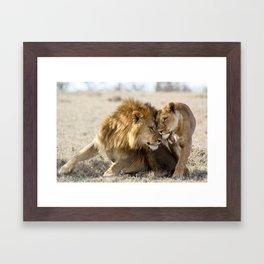 Lions in Love Framed Art Print