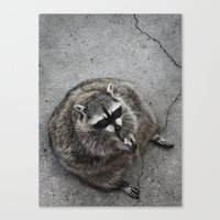 rocket raccoon Canvas Prints featuring Raccoon by Margarita Dunwich