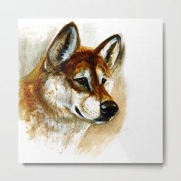 Dingo realistic (c) 2017 Metal Print