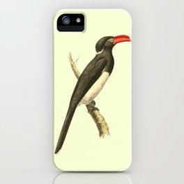 Coronated Hornbill Bird Illustration by William Swainson iPhone Case