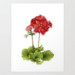 Japanese Primrose Art Print