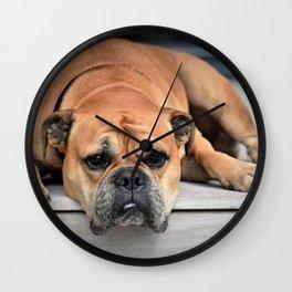 Bulldog waiting for family Wall Clock