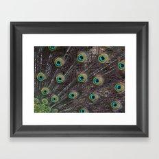 Mr Peacock Framed Art Print