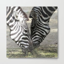 CArt Zebras Metal Print