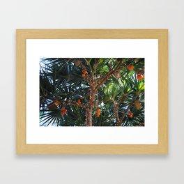 Tropical Breeze Framed Art Print