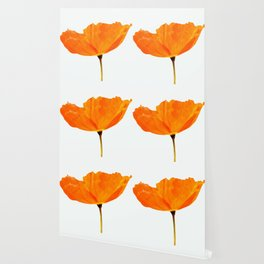 One And Only - Orange Poppy White Background #decor #society6#buyart Wallpaper