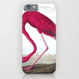 Flamingo Vintage Scientific Bird Illustration iPhone Case