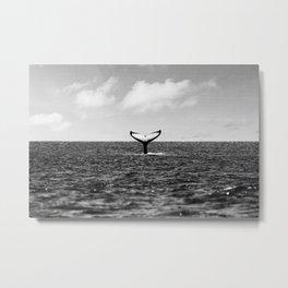Whale Tail Metal Print