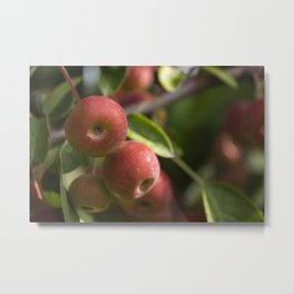 Red drupes #2 Metal Print