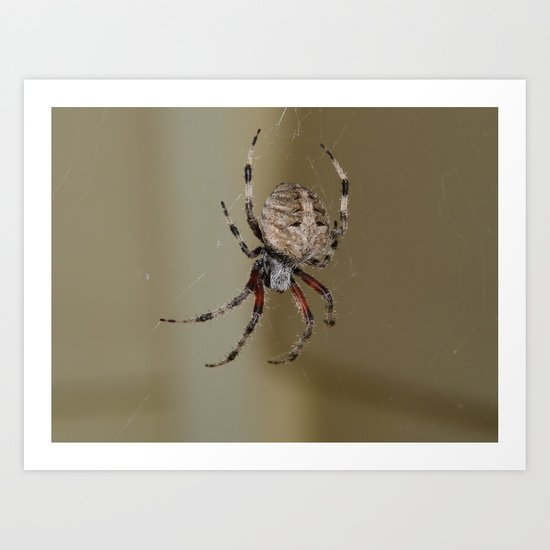 Furry Giant Spider Art Print