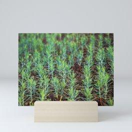 Small forest of thuja Mini Art Print