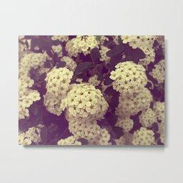 Secret Garden   Vanhoutte Spirea Metal Print