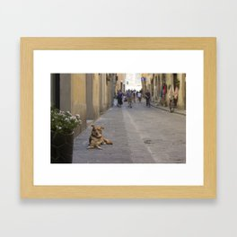 Cane, Distretto di Oltrarno, Firenze Framed Art Print