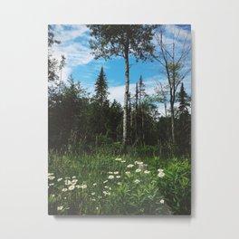 Roadside - Ontario, Canada Metal Print