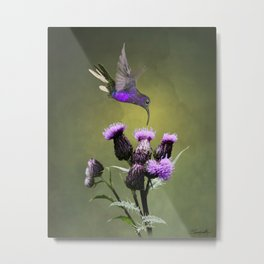 Violet Sabrewing Hummingbird and Thistle Metal Print