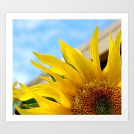 Bright summer sunflower Art Print