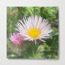 Watercolor Flower, Fleabane 02, RMNP, Colorado Metal Print