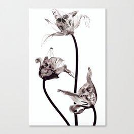 SKULL  X-RAY Canvas Print