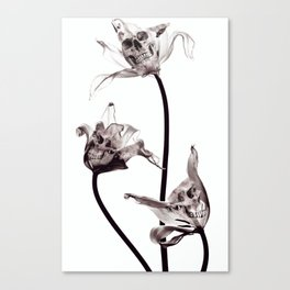 SKULL  X-RAY Canvas Print