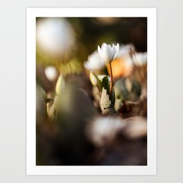 Flower Photography by Aaron Burden Art Print
