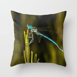 Common Blue Damselfly Throw Pillow