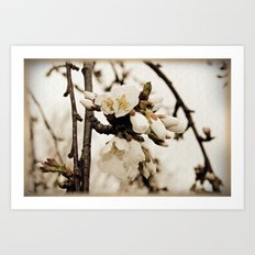 Weeping White Blossoms Art Print
