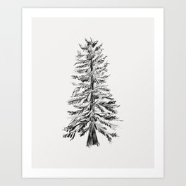 Cedar Tree Art Print