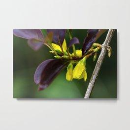 Yellow Flowers in Rain Metal Print