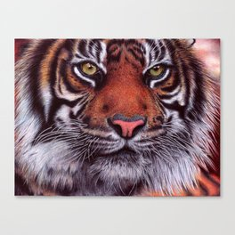 Tiger - Bic Ballpoint Pen Canvas Print