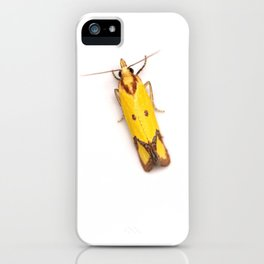 Sulphur Knapweed Moth (Agapeta zoegana) iPhone Case