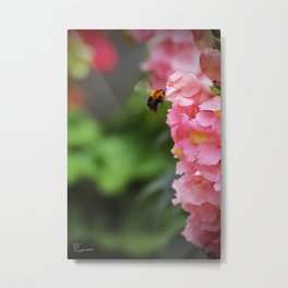 Ready for touchdown - The Bee and the Flower Metal Print
