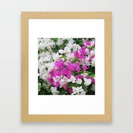 rose, white, asian flower blossom Framed Art Print