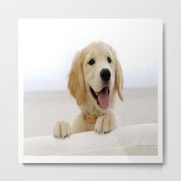 Love Dogs Dog Groomer Paw Print Grooming Cute Metal Print
