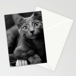Russian Blue Kitten Portrait Stationery Cards