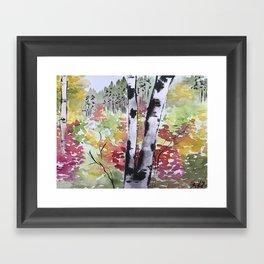 Birch Tree in Autumn Framed Art Print