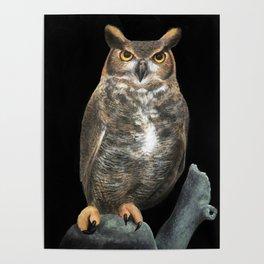 Superb Owl Sunday Poster
