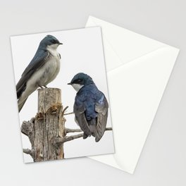 Tree Swallow Times Two Stationery Cards