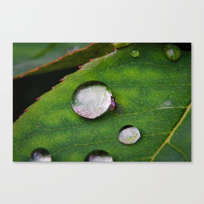 Spherical Swimming Pool Canvas Print