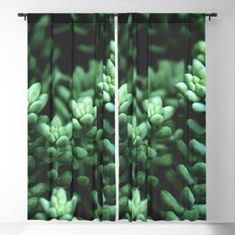 Succulent plants Blackout Curtain