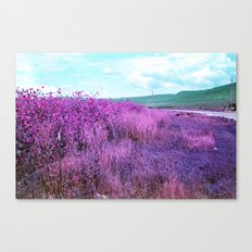 Wild Sunflowers by the Road Canvas Print