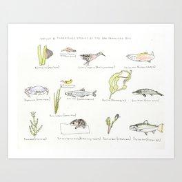 San Francisco Aquatic Native Species List Art Print