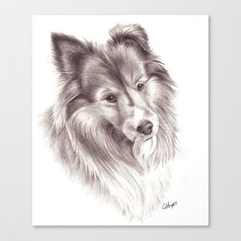 Shetland Sheepdog Canvas Print
