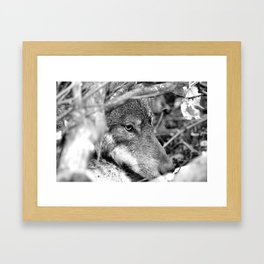 Hidden Wolf Framed Art Print