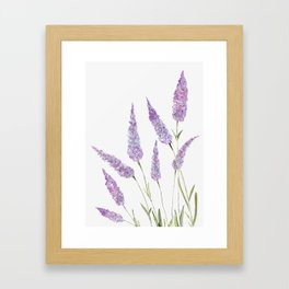 Lavander Framed Art Print