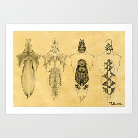 Aquilapes X-Ray Art Print