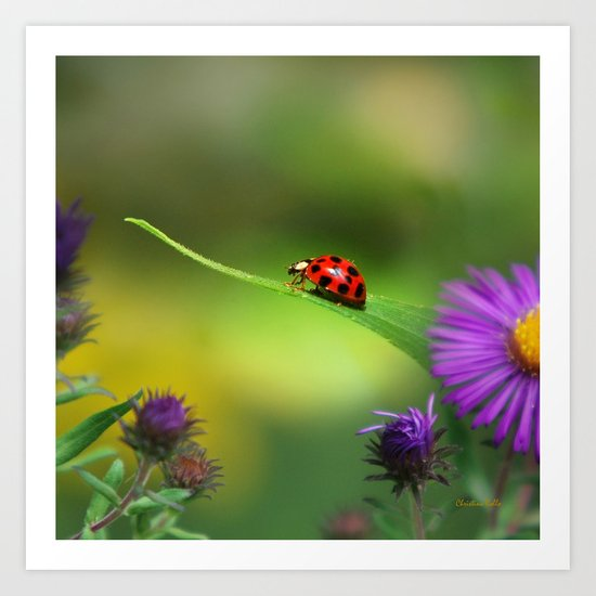 Ladybug Single In Search Art Print