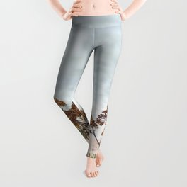 Succulent wild flowers by the sea Leggings