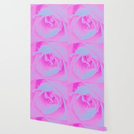 Perfect Hot Pink and Light Blue Rose Detail Wallpaper